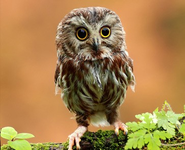 cropped-owl-hi-res-free-wallpaper1.jpg
